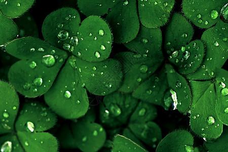 雨后的水滴在植物上温存图片