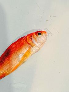 迷失的鱼图片
