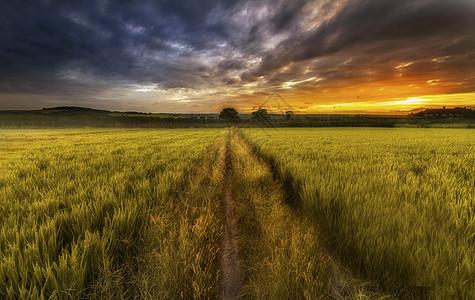 田野上的彩霞图片