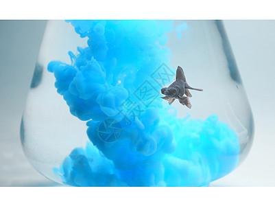 鱼颜料鱼缸图片