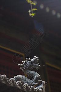 龙的传人图片