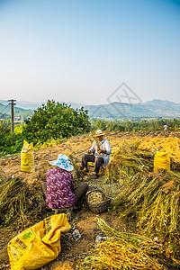 沂蒙山特产 山区人民 秋收 收花生 山村农民 老农民 鲜花生图片