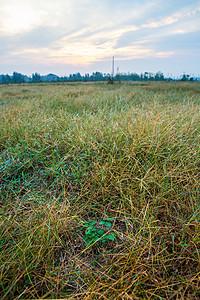 野生丹参长在荒草里自然农法种植图片