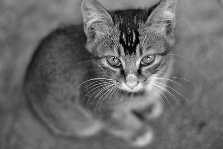 猫咪 小猫图片