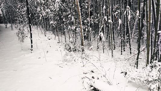 雪后的竹林图片