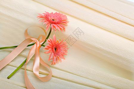 鲜菊花背景图片
