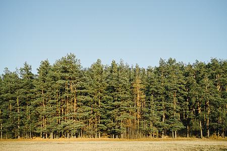 一排排的树木图片