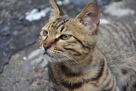 凝视的猫图片
