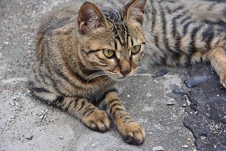 调皮的猫图片
