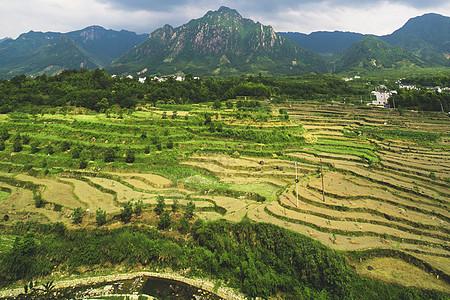 航拍稻田图片