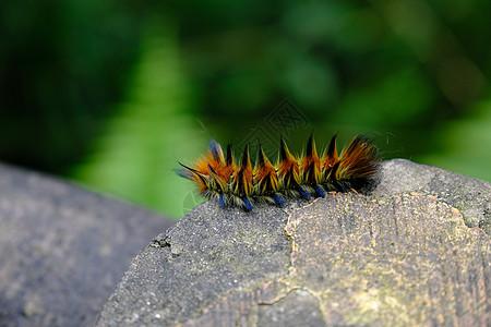 彩色毛毛虫图片