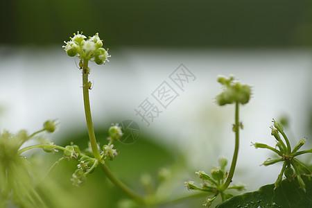 绿色植物特写图片