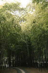 竹林逆光图片