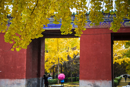 宫外的秋叶图片