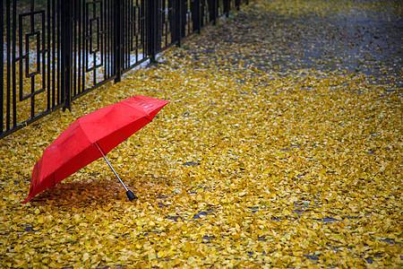 秋雨.红伞图片