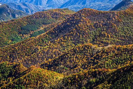 秋色之山图片