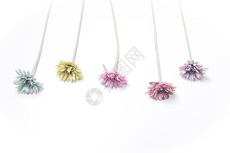 花儿背景图片