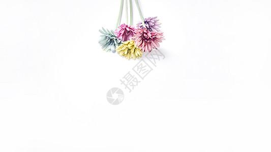 仿真花非洲菊留白设计素材图片