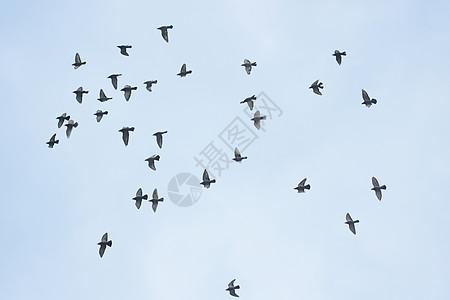天空中的飞鸟图片