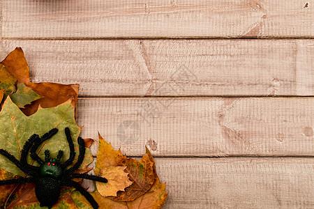 万圣节黑蜘蛛秋叶木质板背景图片