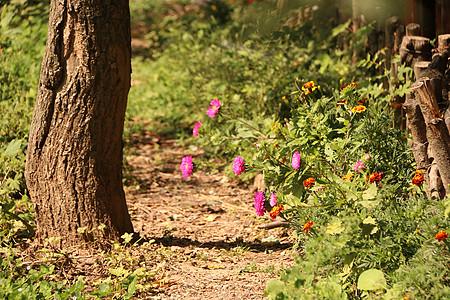 阳光下的鲜花图片