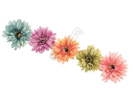 花的平面摆设图片
