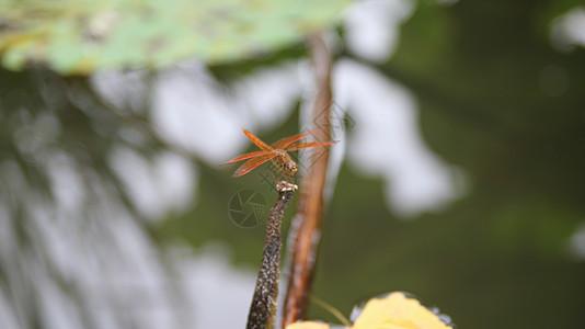 花鸟鱼虫图片