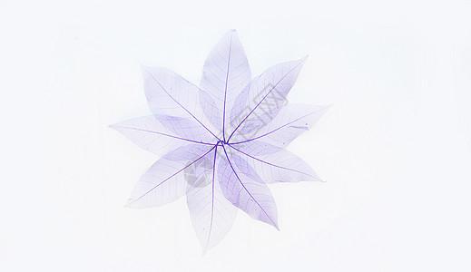 叶脉组合成的花形图片