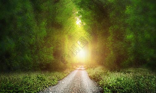 奇幻 树林图片