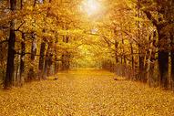 多彩的秋天图片
