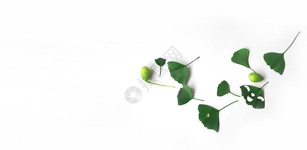 白背景上的叶子摆拍图片