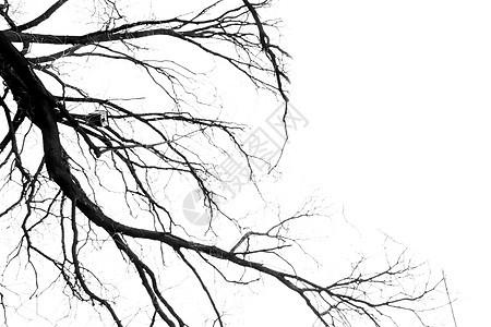 枯树枝图片