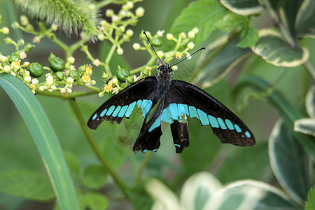 停在草叶上的花蝴蝶图片