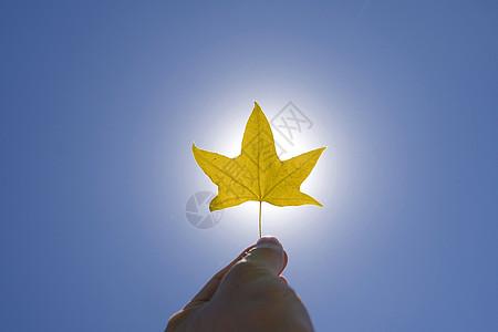 秋之光图片