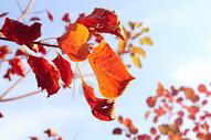 秋天500154034图片