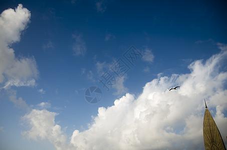 天空中一只海鸟图片
