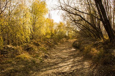 一场秋景图片
