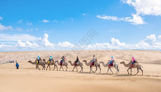海边的骆驼图片