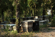 山林中蜂场图片