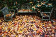 秋季落叶图片