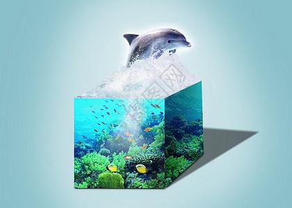 跳跃的海豚图片