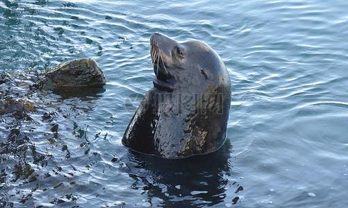 在水里的动物高清图片