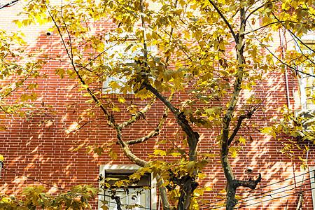 秋天满树的叶子黄了图片