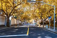 上海秋天街景图片