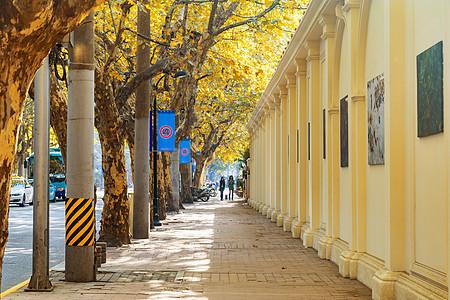 上海秋色街景图片