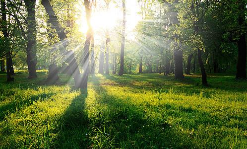 阳光下的小树林图片