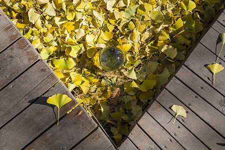 秋.落叶图片