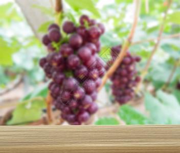 木板处的葡萄园图片
