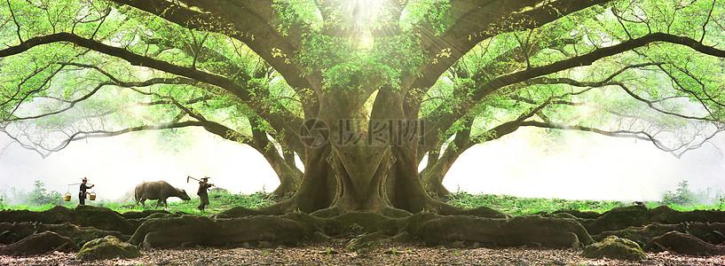 森林大树背景图片