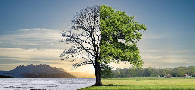 干旱和茂盛的大树图片